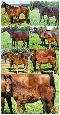 Foal Crop