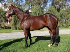 REDOUTE'S CHOICE x LES RY LEIGH