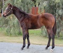 STRYKER x IRESISTABEEL (NZ)
