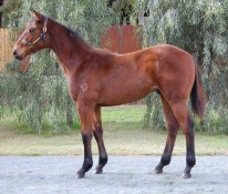 VON COSTA DE HERO x VALENTINE ROSE (NZ)