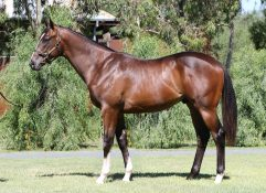 SNITZEL x SEASIDE HOME (USA)