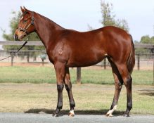 HINCHINBROOK x SHARP SECRETARY (USA)